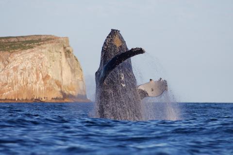 Coastal Adventure Tasmania Australia