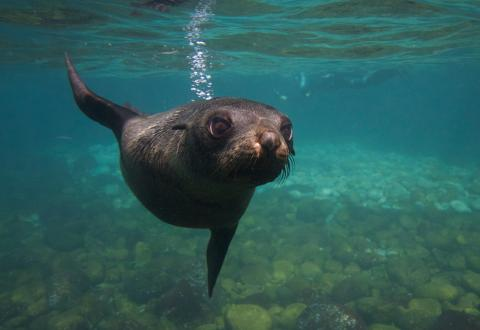 Seal & Ocean Expedition – Participant Tasmania Australia