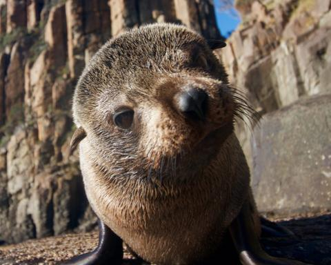 Seal & Ocean Expedition - Observer