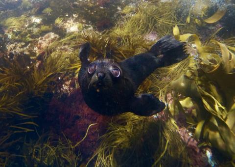 Seal & Ocean Expedition – Participant Tasmania Australia