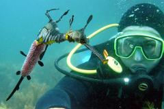 Guided Dive with Gear Hire - Certified Divers