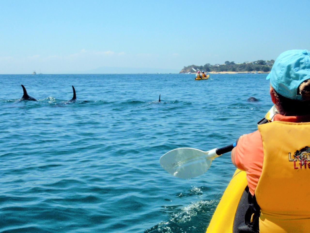 Sea Kayak Tour - Dolphin Sanctuary