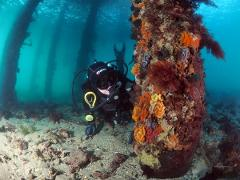 Double Guided Dive with Gear Hire - Certified Divers