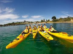 Kayak Tour - Dolphin Sanctuary