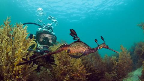 Private Guided Scuba Dive