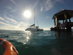 Sailing Cruise & Seal Snorkel Option