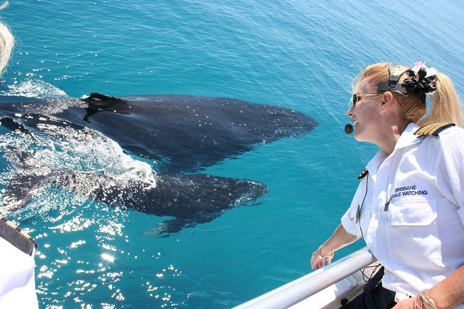 Whale Watching - Direct Redcliffe