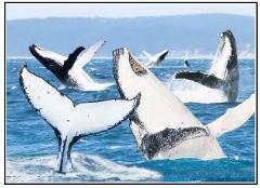 3D Humpback Whale Postcard