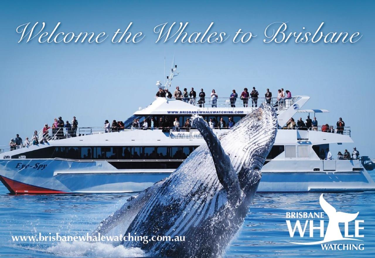 2021 Season Pass - Whale Watching Adventure