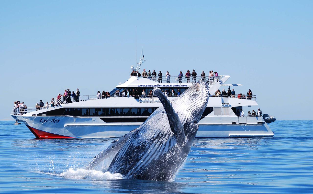 VIP Whale Watching Adventure
