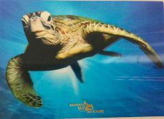 3D Turtle Postcard