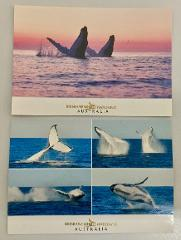 Whale Postcard Pink & Blue