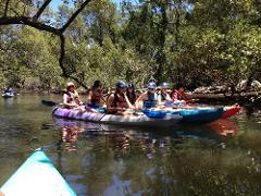 Eco Kayak or SUP Tour