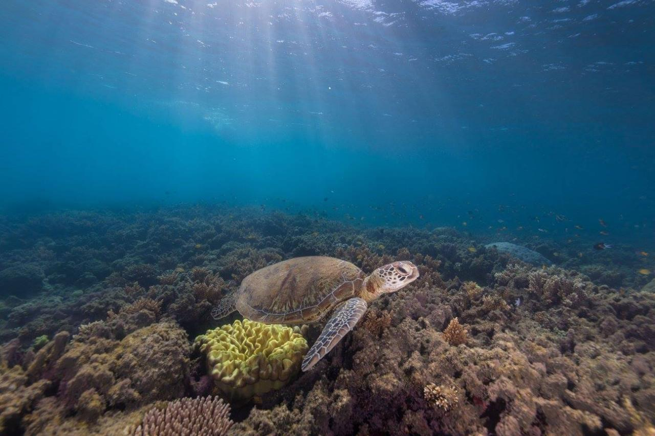 Frankland Islands River & Reef Cruise