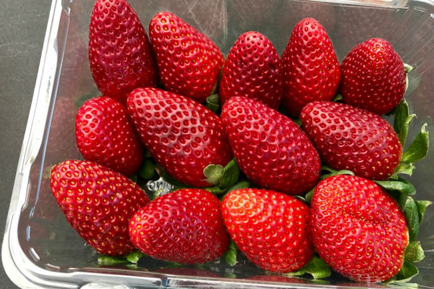 Jetski to Strawberry Heaven