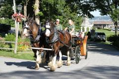30 minute evening Historic Downtown horse drawn carriage tour