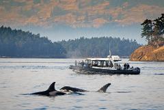 Full Day Whale Watch & Wildlife Tour - Snug Harbor, West Side Friday Harbor, San Juan Island Departure