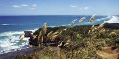 West Auckland - Muriwai Beach & Gannet Colony Tour