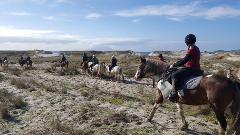 North Auckland - Pakiri Beach Horse Riding
