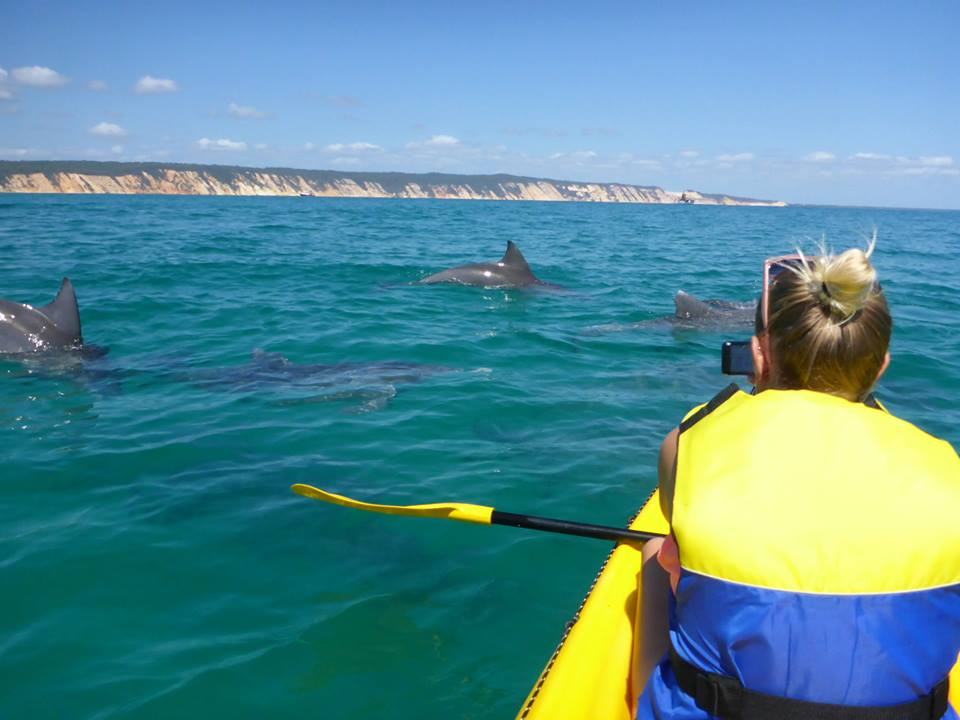 Noosa Dolphin View Kayak Tour & Great Beach Drive Adventure -  Day Tour