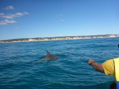 10% off Spectacular Dolphin View Kayak + Great Beach Drive Adventure - Noosa day tour
