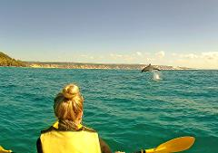 Noosa to Rainbow Beach - Beach Drive & Dolphin View Kayak - Day Trip Departing Noosa