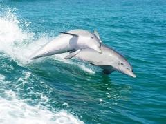 Mandurah and Dolphin Cruise