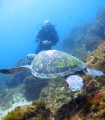 Double Scuba Dive - Turtle Island - Certified Divers- Morning 11:30am (QLD time)(June-Oct)
