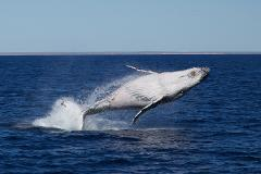 3 Hr Whale Watching Tour