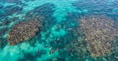 2 Hr Coral Viewing and Snorkeling