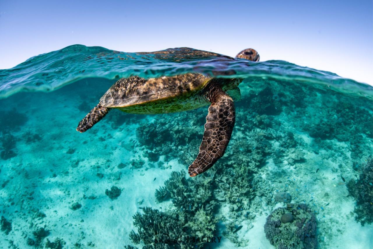 3 Hr Turtle Ecotour
