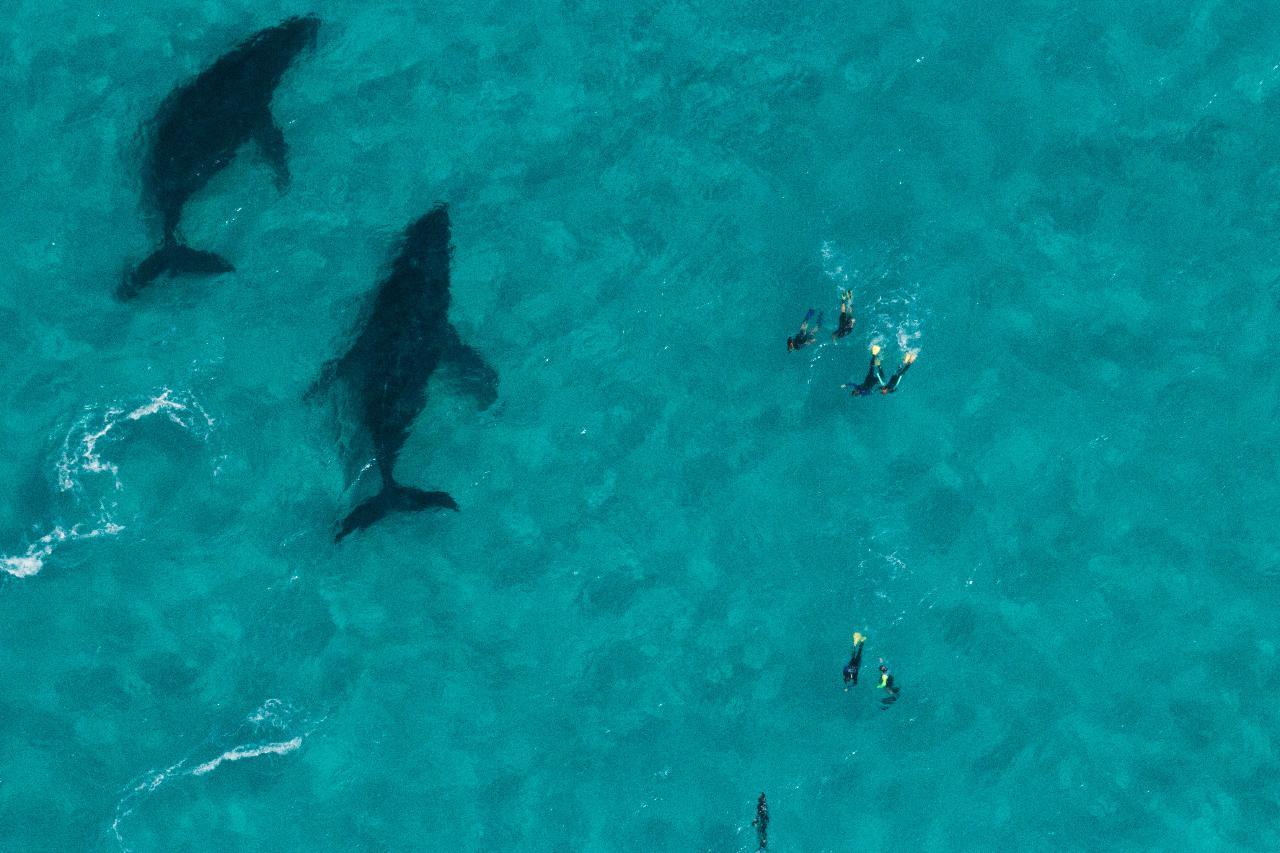 Humpback Whale Safari