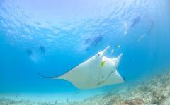 Marine Eco Safari - GIFT VOUCHER