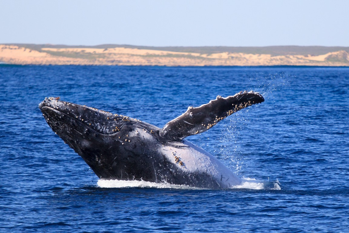 3 Hr Whale Watching Tour - GIFT VOUCHER