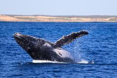 3 Hr Whale Watching Tour - GIFT VOUCHER