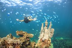 2 Hr Coral Viewing and Snorkeling - GIFT VOUCHER
