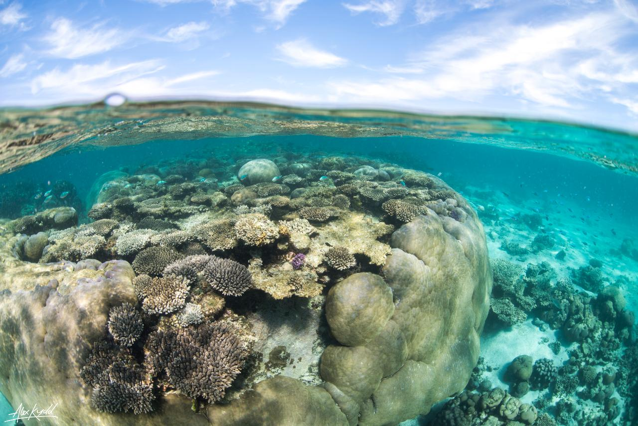SNORKEL DISCOVERY SAILING CRUISE