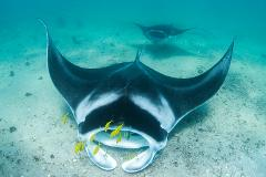 BEST OF NINGALOO MANTAS AND MORE