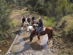Confidence on the Trail Clinic (own horse)