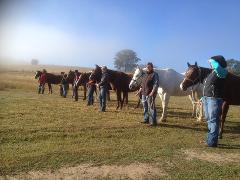 Beginner Rider Horsemanship Clinic - 1/2 Day