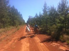 Pine Forest Ride