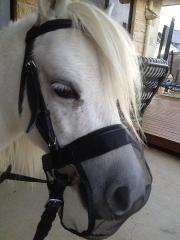 Grasstopper (Pony Size)