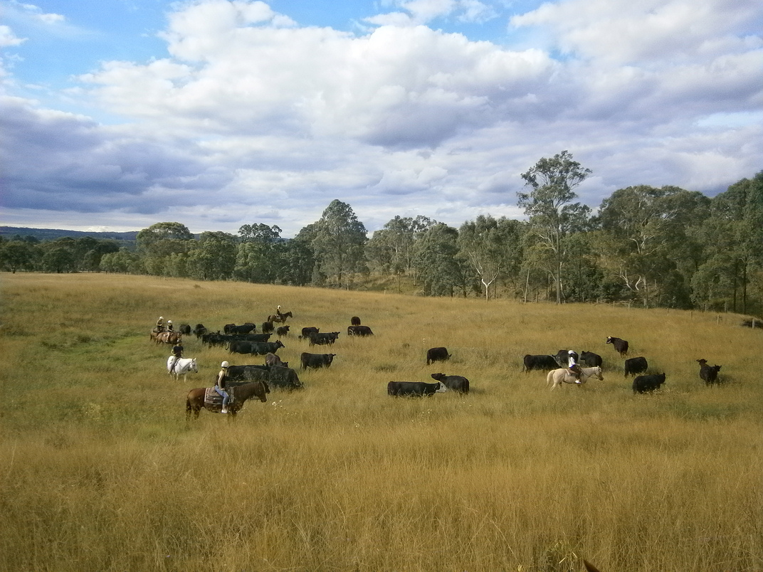 5 day horse riding and cattle handling experience