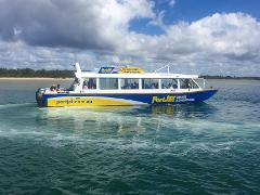Morning Tea River Cruise with Dolphin Spotting