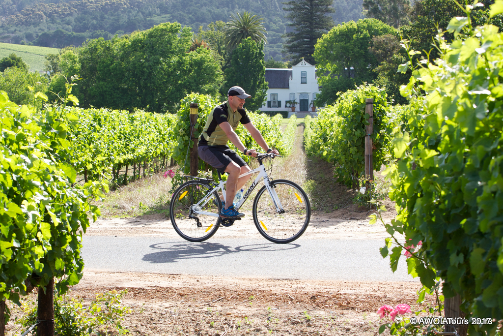 Winelands Constantia cycling