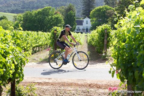 Winelands Constantia cycling