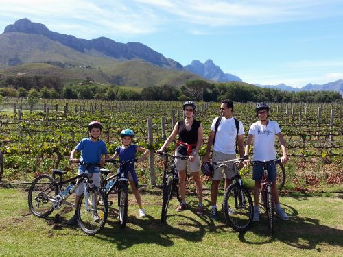 Winelands Meander cycling tours