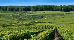 AMAZING CHAMPAGNE - SHARED MULTI DAY PACKAGE FROM REIMS