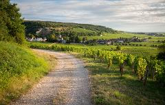 BURGUNDY PRIVATE FULL DAY WINE TOUR IN COTES DE NUITS