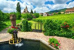 PRIVATE WINES AND/OR VILLAGES TOUR FROM STRASBOURG